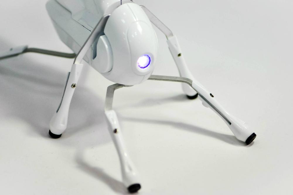 Вот как привлекаются инвестиции в стартап-проекты. Робот Antbo - яркий тому пример.